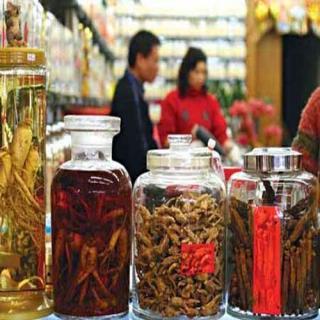 Các nhà thuốc Đông y cần mua Đông trùng hạ thảo làm thuốc nên mua tại cửa hàng Viện Bảo Vệ Thực Vật Việt Nam