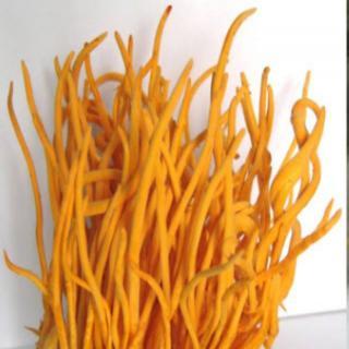 Đông trùng hạ thảo thân trên sinh khối gạo lứt tươi 100g