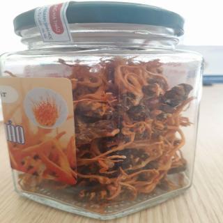 Tác dụng dược lý lâm sàng của một số hoạt chất trong Đông trùng hạ thảo