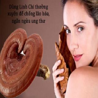 Nấm linh chi chống béo phì